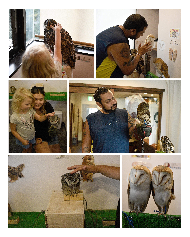 OwlCafe