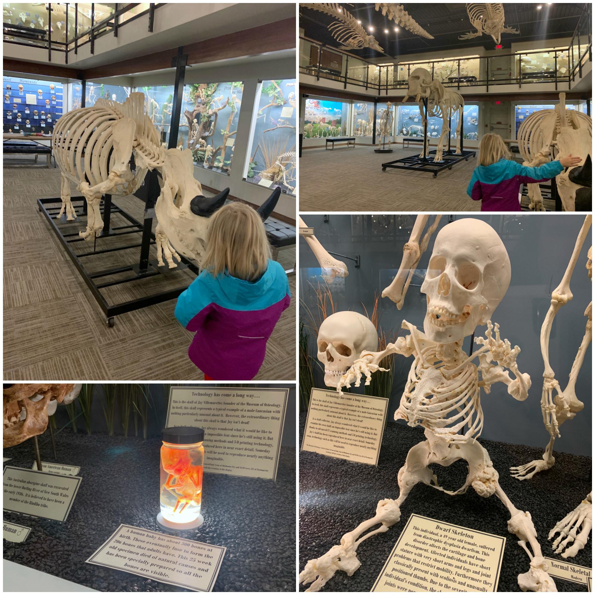 Osteology2