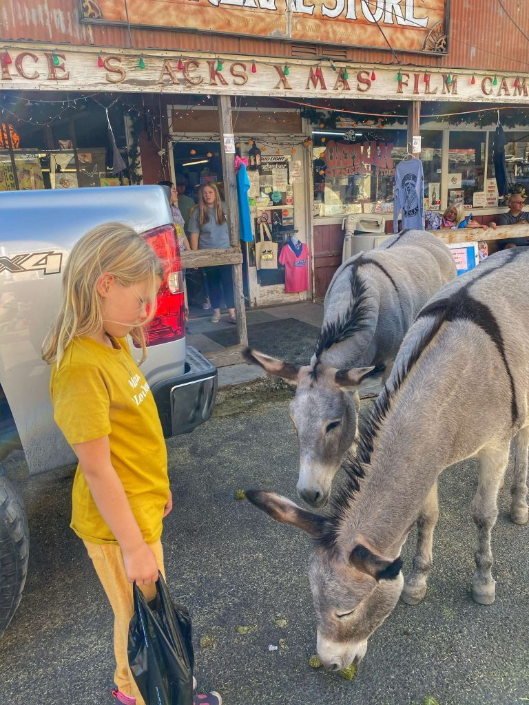 oatman arizona wild donkeys