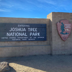 visiting Joshua Tree National Park with kids