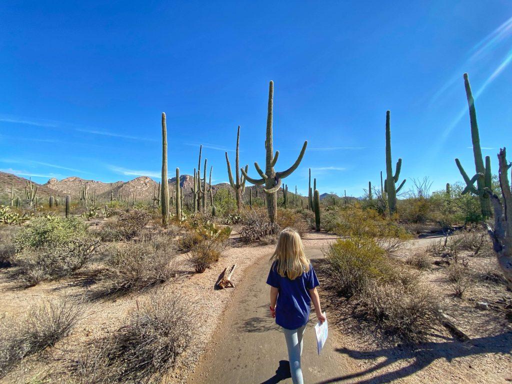 kid friendly hiking trails saguaro national park
