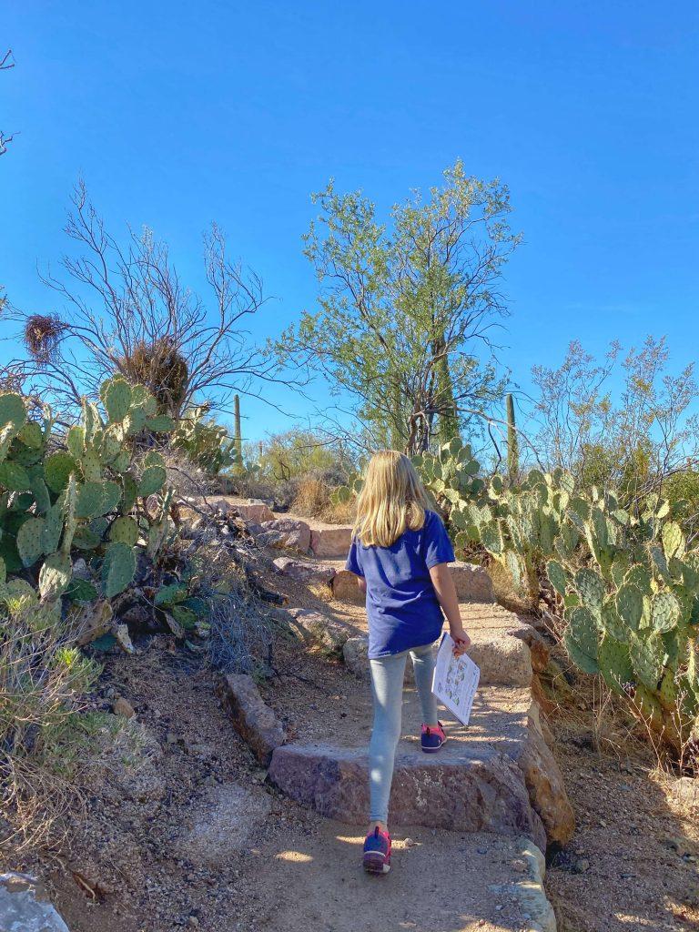 best hiking trails for kids saguaro national park